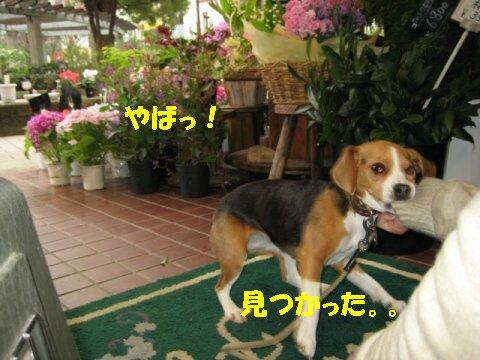 IMG_6558_sh01.jpg