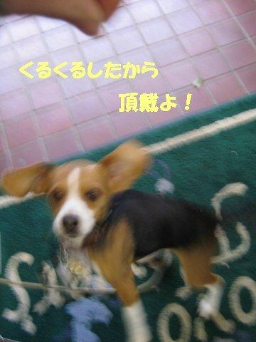 IMG_6578_sh01.jpg