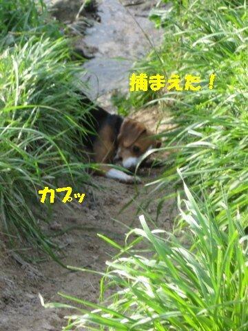 IMG_6713_sh01.jpg