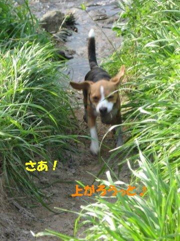 IMG_6714_sh02.jpg