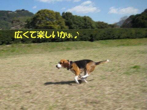 IMG_6923_sh01.jpg