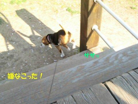 IMG_7104_sh01.jpg