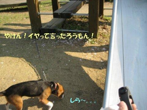 IMG_7108_sh01.jpg
