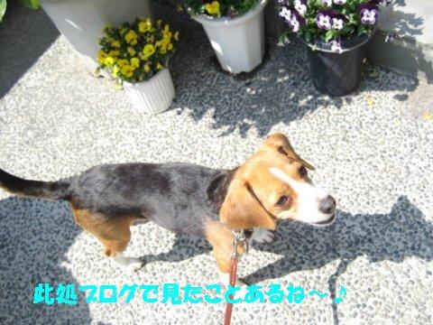 IMG_7367_sh01.jpg