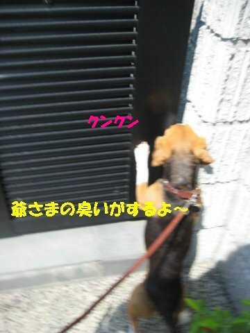 IMG_7368_sh01.jpg