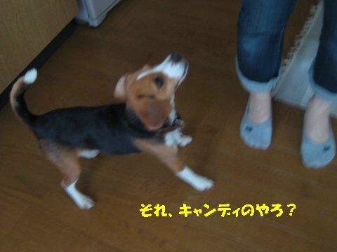 IMG_7405_sh01.jpg