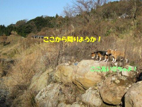 IMG_7467_sh01.jpg