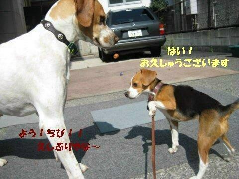 IMG_7496_sh01.jpg