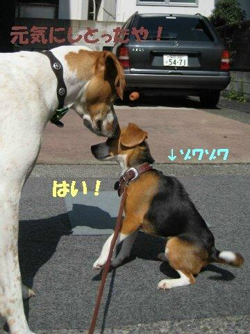 IMG_7497_sh01.jpg