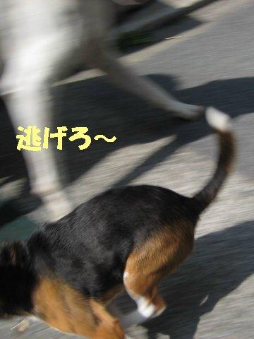 IMG_7504_sh01.jpg