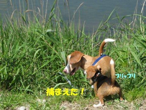 IMG_7641_sh01.jpg