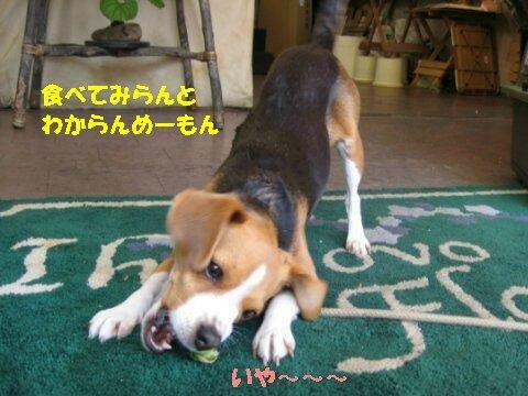 IMG_7716_sh01.jpg