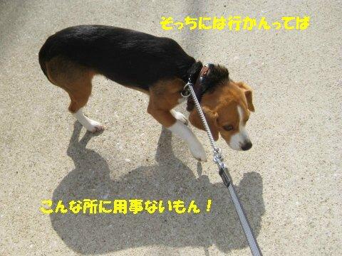 IMG_7947_sh01.jpg