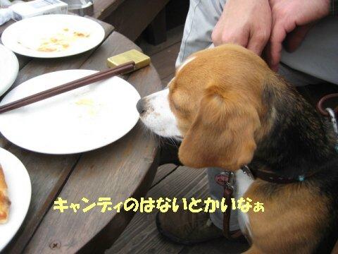 IMG_8087_sh01.jpg