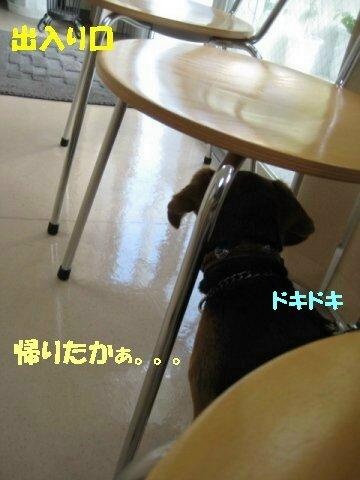IMG_8376_sh01.jpg