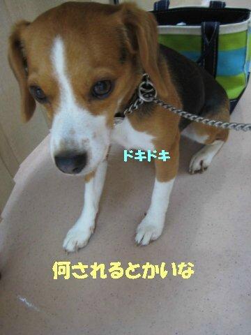 IMG_8382_sh01.jpg