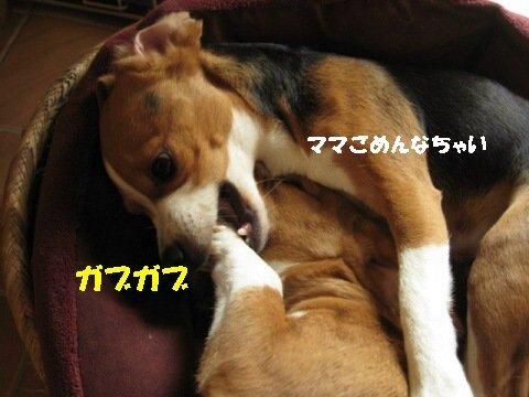 IMG_8469_sh01.jpg