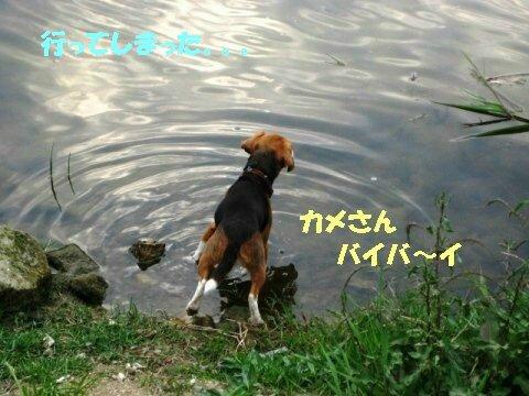 IMG_8474_sh01.jpg