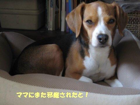 IMG_8640_sh01.jpg