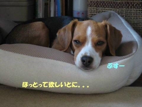 IMG_8641_sh02.jpg