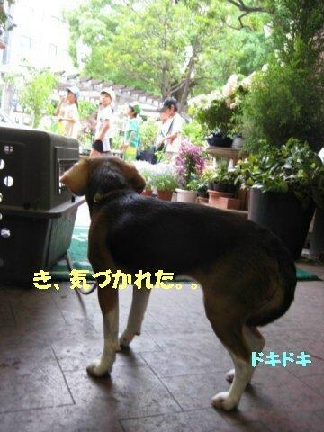 IMG_8695_sh01.jpg
