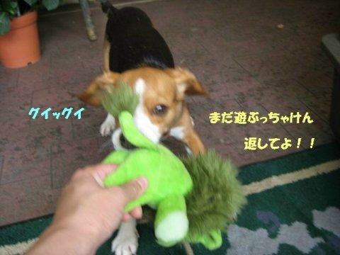 IMG_8821_sh01.jpg