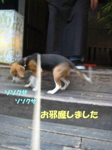 IMG_8951_sh02.jpg