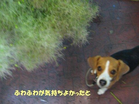 IMG_9129_sh01.jpg
