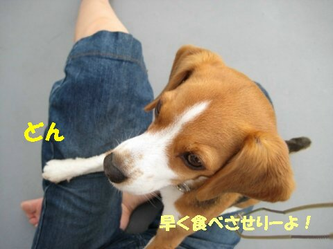 IMG_9294_sh01.jpg