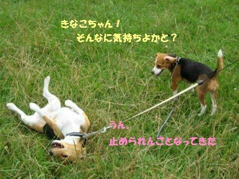 IMG_9433_sh01.jpg