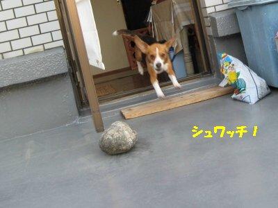 IMG_9501_sh01.jpg