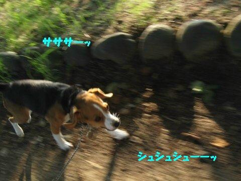 IMG_9704_sh01.jpg