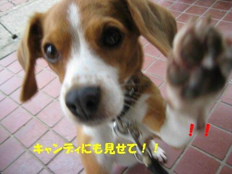 IMG_9872_sh01.jpg