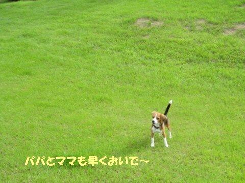 IMG_9887_sh01.jpg