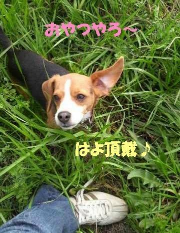 P1000410_sh01.jpg