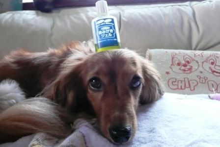 歯磨きする?