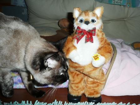 ドーモ!おやじネコです