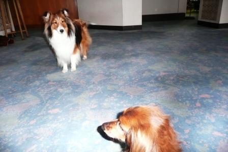 看板犬さんとパム