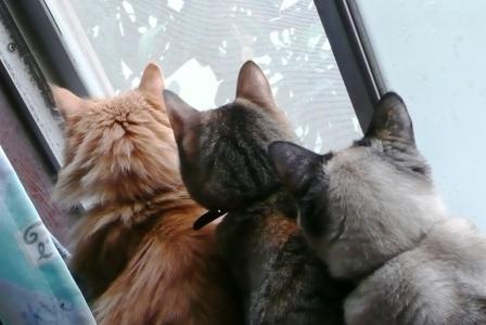 余分3姉妹