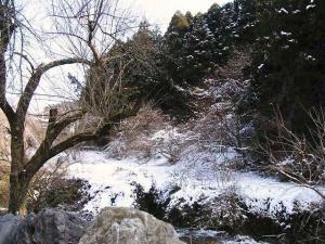12-2-19 雪景色