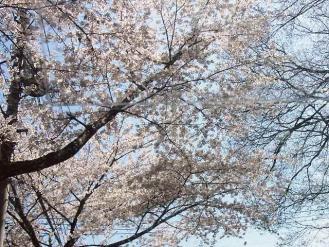12-4-8 桜3