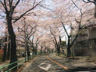 12-4-8 桜2