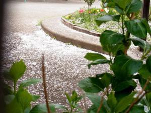 12-4-13 桜庭