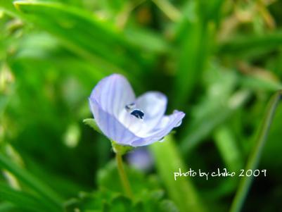 春の花 046n