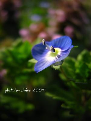 春の花 111n