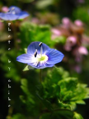 春の花 116n