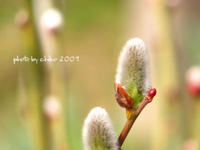 春の花 181n