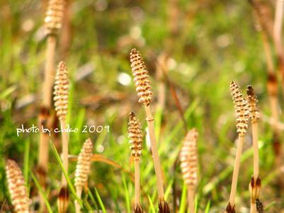 春の花 265n