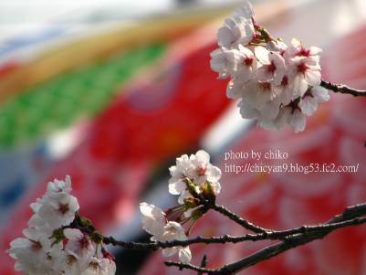 桜 141n