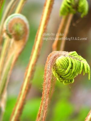春の森 219n